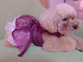 シフォンちゃん2ドレス