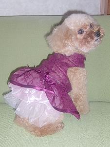シフォンちゃん3ドレス